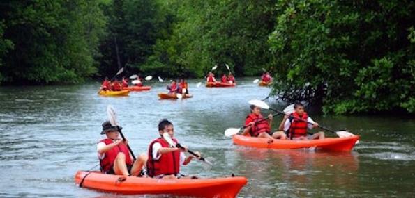 Mangrove Kayaking Adventure (Beginner Level) - 1 Adult