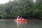 Mangrove Kayaking Adventure - Kids (12 Years and under)