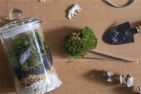 Moss Terrarium Workshop - New Sept 2017