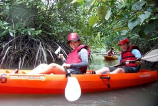 Mangrove Kayaking Adventure (Beginner Level) - 1 Child